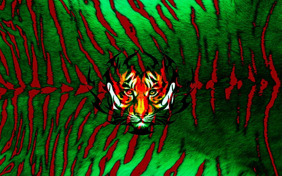 Tigers from Bangladesh